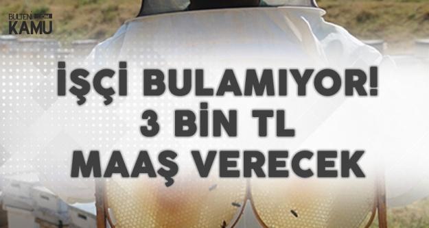 3 Bin Lira Maaş Verecek! Eleman Bulamıyor