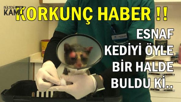 Feci Olay: Esnaf, Beslediği Kediyi Öyle Bir Halde Buldu ki..