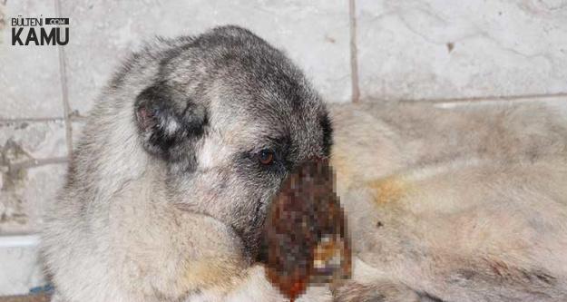 Korkunç Olay: Kulaklarını Kesip Başına Kezzap Döktüler