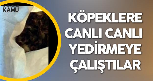 Diyarbakır'da Korkunç Olay! Civcivleri Köpeklere Canlı Canlı Yedirmeye Çalışmışlar!