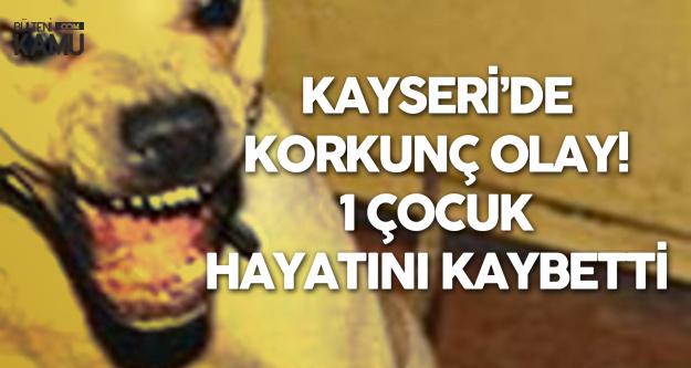 Kayseri'de Dehşet! Sokak Köpekleri Liselilere Saldırdı, 1 Çocuk Hayatını Kaybetti