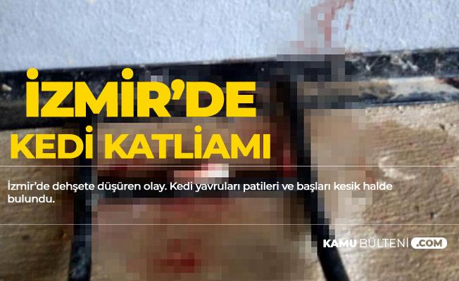 İzmir'de Kedi Katliamı! Başları Kesik Halde Bulundu