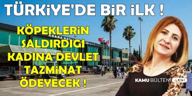 Türkiye'de Bir İlk: Devlet Sokak Köpeklerinin Saldırdığı Kadına Tazminat Ödeyecek