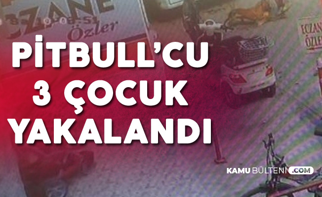 Gebe Kediyi Pitbullun Önüne Atıp Parçalatan 3 Çocuk Gözaltına Alındı