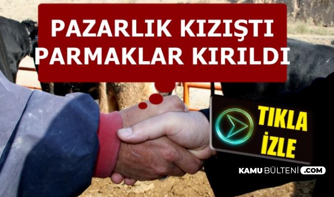 Kurbanlık Pazarlığı Kızıştı: Parmakları Kırıldı