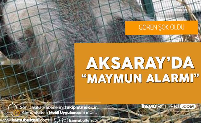 Aksaray'da 'Maymun Alarmı' Gören Şok Oldu!