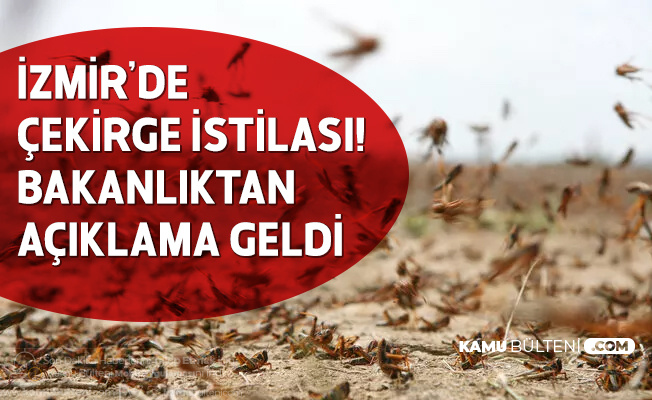 İzmir'de Çekirge İstilası! Bakanlıktan Açıklama Geldi