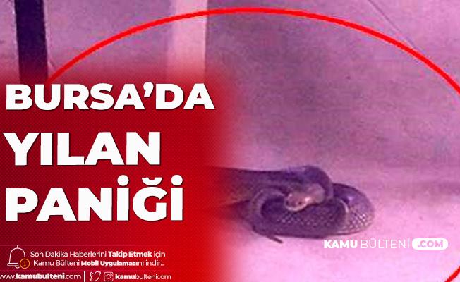 Bursa'da Tekstil Firmasında Yılan Paniği Yaşandı