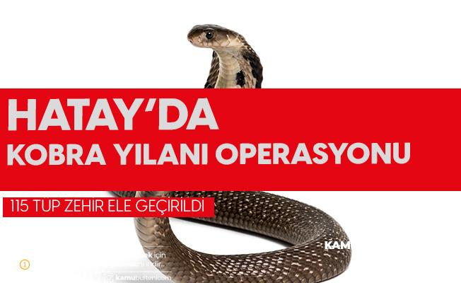 Hatay'da 115 Tüp Kobra Yılanı Zehri Ele Geçirildi