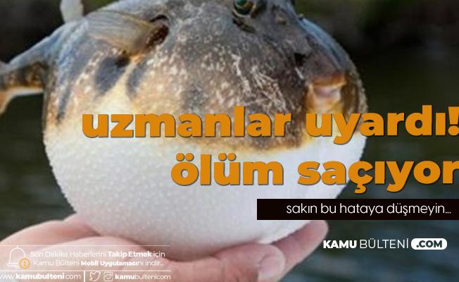 Yediği Balon Balığı Yüzünden Hayatını Kaybetti