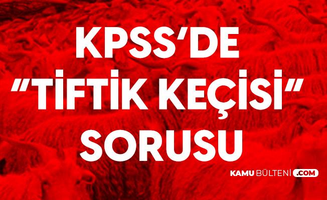 """""""Tiftik Keçisi Nerede Yetişir?"""" Sorusu 6 Eylül KPSS'de Soruldu"""