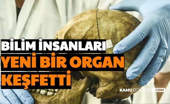 Görüntü Yayımlandı: Bilim İnsanları, İnsan Beyninde Yeni Bir Organ Keşfetti