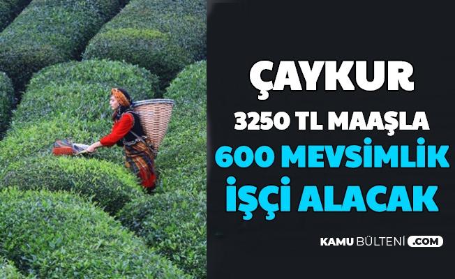 Çaykur 600 Mevsimlik İşçi Alımı Yapacak: İşte Başvuru Şartları ve Maaş