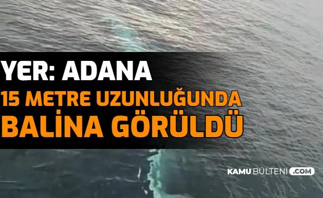 Adana'da 15 Metre Uzunluğunda Balina Görüntülendi
