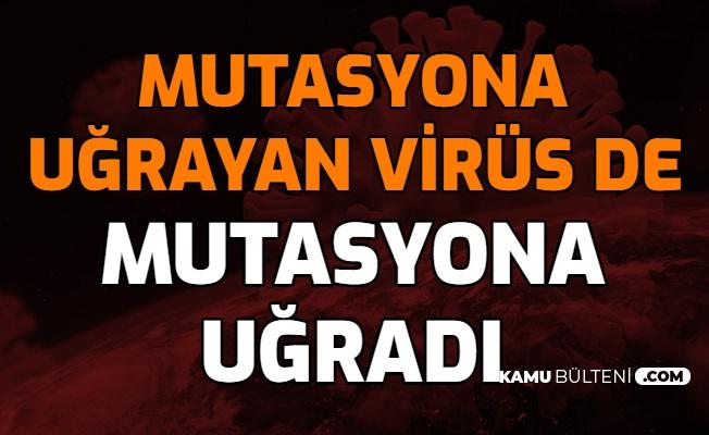 Mutasyona Uğrayan Koronavirüs de Mutasyona Uğradı