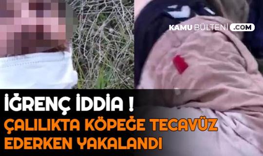 İğrenç İddia: Köpeğe Tecavüz Ederken Yakalandı