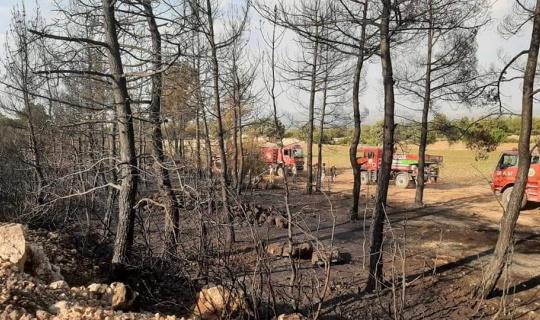 Denizli'de 1 günde 2. orman yangını