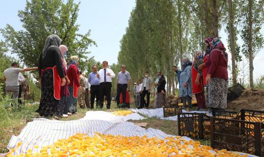 Vali Sarıibrahim kuru kayısı üretim yerini ziyaret etti