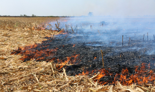 Anız yakmak hem toprağı hem çevreyi öldürüyor