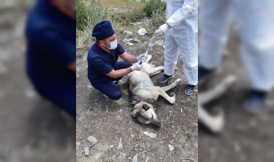 Ayı saldırısına uğrayan köpek yaralandı