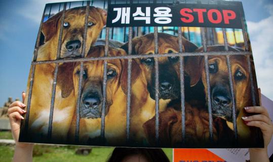Güney Kore'de köpek eti tüketimi yasaklanabilir