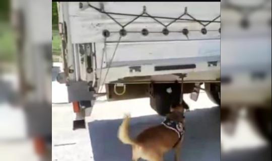 Narkotik köpeği buldu TIR dorsesinde yakalandı