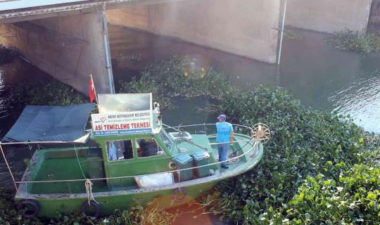Hatay'da Asi Nehri'ni kaplayan su sümbülleri temizleniyor