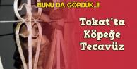 Tokat'ta tüyler ürperten olay: Köpeğe tecavüz