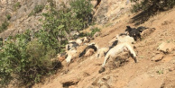 Şırnak'ta Korkunç Olay! 200 Küçükbaş Hayvan Telef Oldu