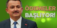 Tarım ve Orman Bakanı Açıkladı! Çiğ Süt Ödemeleri Başlıyor