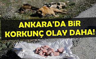 Ankara'da Bir Vahşet Daha: Boş Arazide Köpek Ölüleri Bulundu