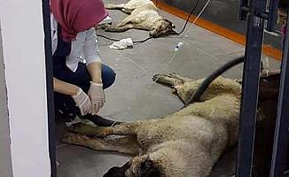 Batıkent'teki Köpek Katliamı ile İlgili 1 Kişi Gözaltına Alındı