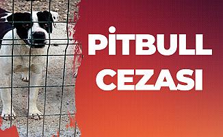 Pitbull Besleyen 2 Kişiye 7 Bin 802 TL Ceza