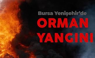 Bursa Yenişehir'de Orman Yangını! 5 Söndürme Helikopteri Müdahale Ediyor