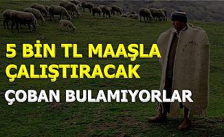 5 Bin TL Maaş Veriyorlar: Çalışacak Çoban Bulamıyorlar