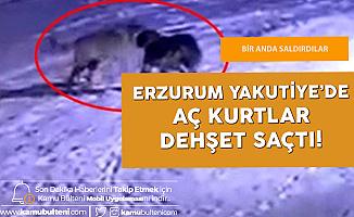 Erzurum'da Dehşete Düşüren Olay! Aç Kurtlar Bekçi Köpeğini Parçaladı!