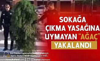 Sırbistan'da İlginç Olay! Sokağa Çıkma Yasağını Delen 'Ağaç' Yakalandı