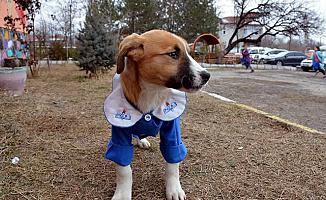 Son Dakika Haberi... Fındık Hayatını Kaybetti - Köpeklerde Gençlik Hastalığı Nedir?