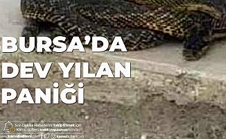 Bursa'da Dev Yılan Paniği! İş Yerine Geldiklerinde Şoka Uğradılar