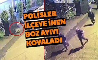 Polisler, İlçe Emniyetin Önünden Geçen Boz Ayıyı Kovaladı