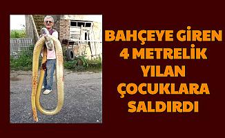 Sinop'ta Feci Olay: Evin Bahçesine Giren 4 Metrelik Yılan, Çocuklara Saldırdı