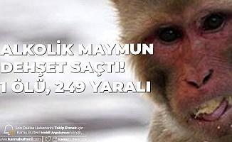 Alkolik Maymun Dehşet Saçtı! 1 Ölü, 249 Yaralı