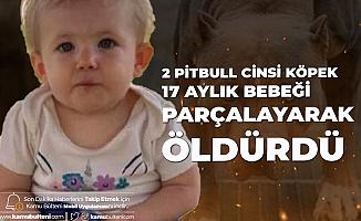 17 Aylık Bebek Pitbull Saldırısında Feci Şekilde Can Verdi