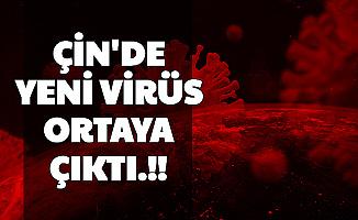 Son Dakika: Çin'de Yeni Virüs Ortaya Çıktı (Domuz Gribi Nasıl Bulaşır?)