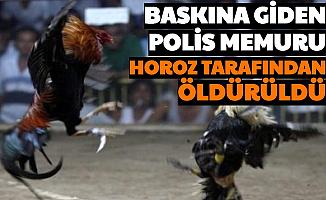 Baskına Giden Polis Memuru Horoz Tarafından Öldürüldü