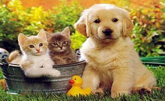 İşte En Güzel 4 Ekim Dünya Hayvanları Koruma Günü Mesajları Resimleri (Bugün Ne Günü)
