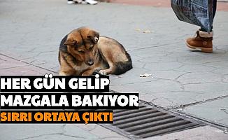 İzmit'te Saatlerce Mazgala Bakan Köpeğin Sırrı Ortaya Çıktı