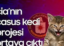 """CIA'nın """"Casus Kedi"""" Projesi Başarısızlıkla Sonlandı! 'Söz Geçirilemedi...'"""