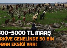 Türkiye Geneli 50 Bin Çoban Alımı Yapılıyor: 3500-5000 TL Maaş