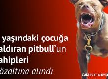 İstanbul Kartal'da 9 yaşındaki Çocuğa Saldıran Pitbull Cinsi Köpeğin Sahipleri Gözaltına Alındı